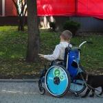 Галафест 2016_мальчик на коляске собака