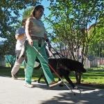 Школа собак-поводырей