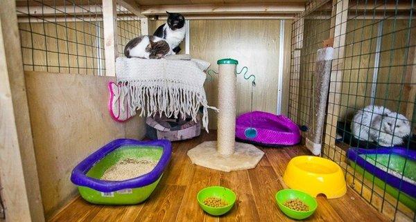 Где в москве есть приюты для кошек